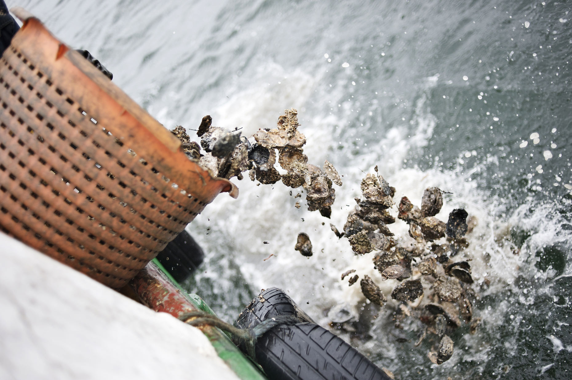 Documentary photography of Oyster farming in Stranraer