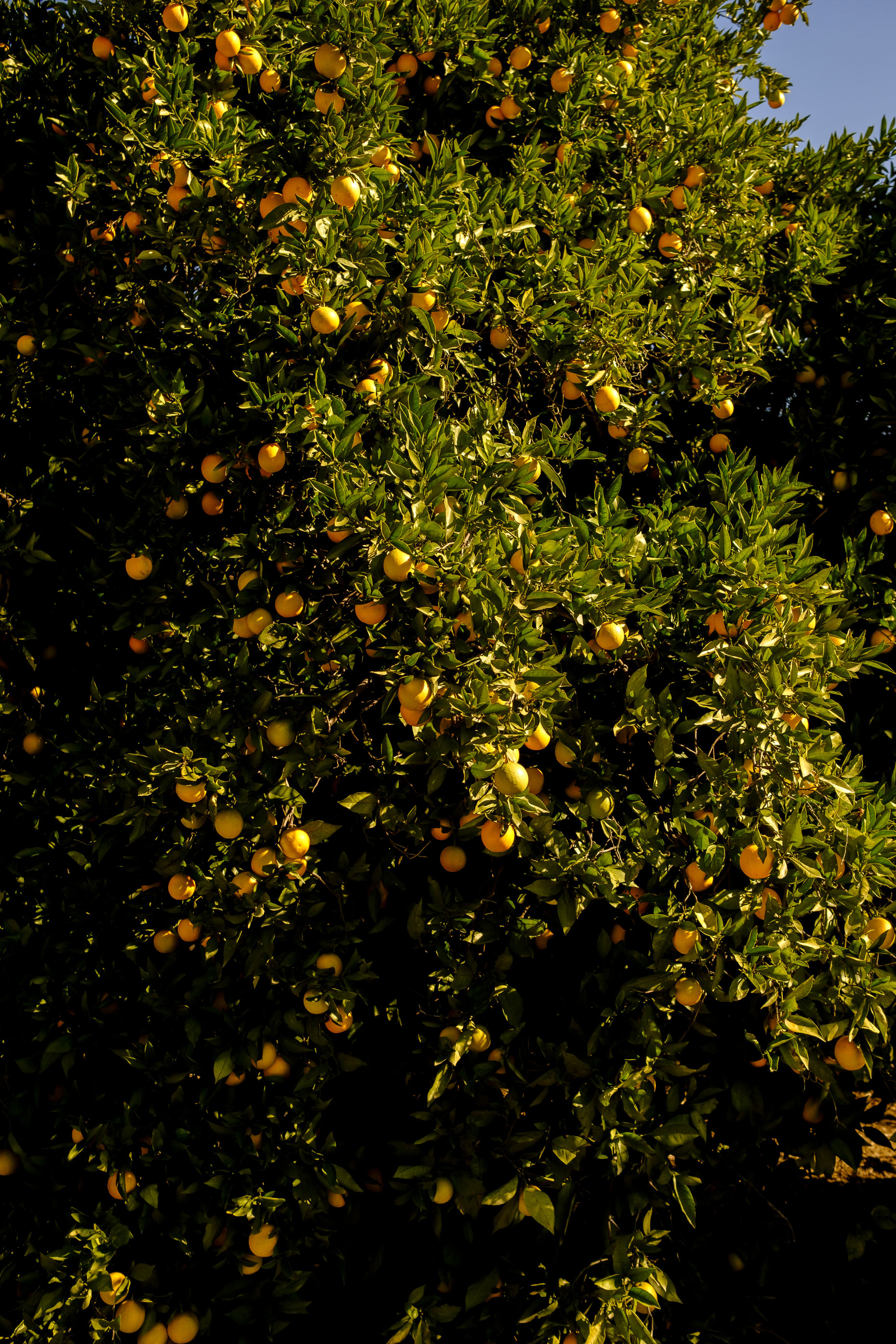 Oranges by London commercial photographer Andy Smith