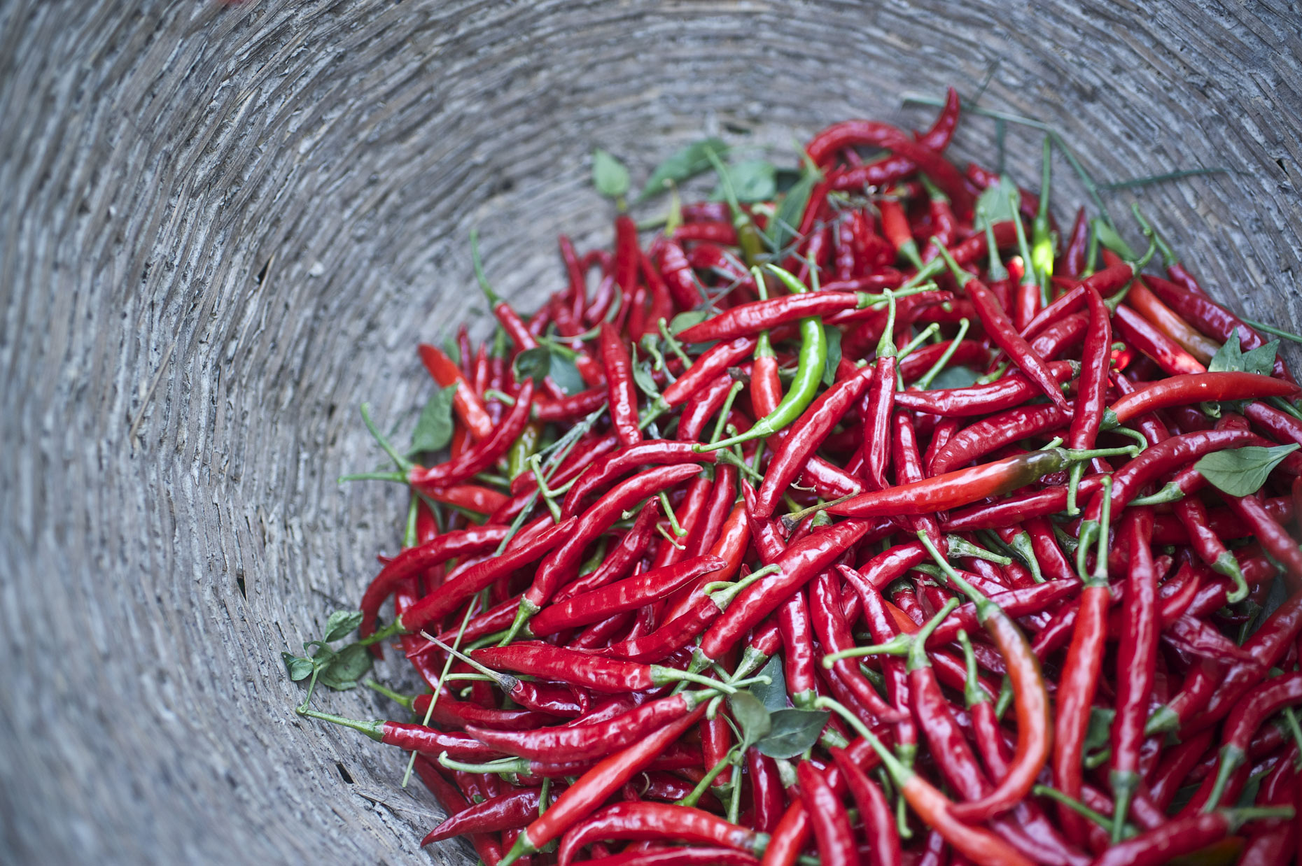 Chilli crop photographed for Olam